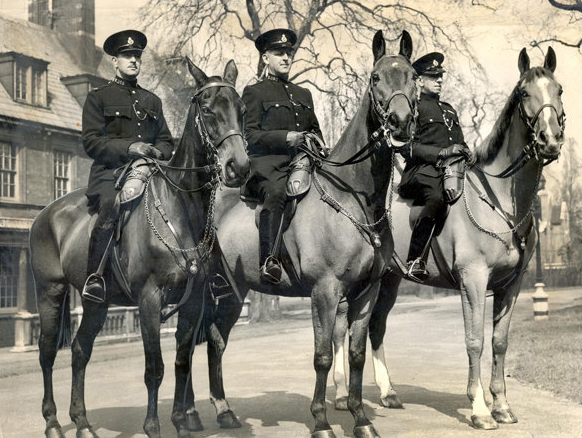 Blog | 11 War Hero Animals Awarded Medals | Olga and Upstart
