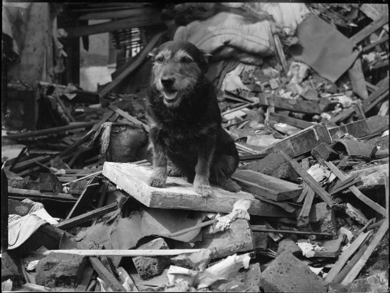 Blog | 11 War Hero Animals Awarded Medals | Rip