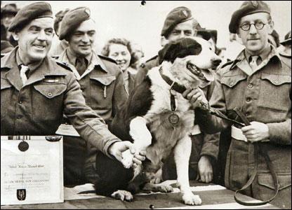 Blog   11 War Hero Animals Awarded Medals   Rob